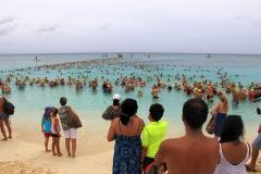 Flowers Sea Swim One Mile Swim 2015 - 122